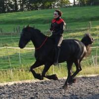 Pferdeflüstern heisst auch Pferde trainieren.